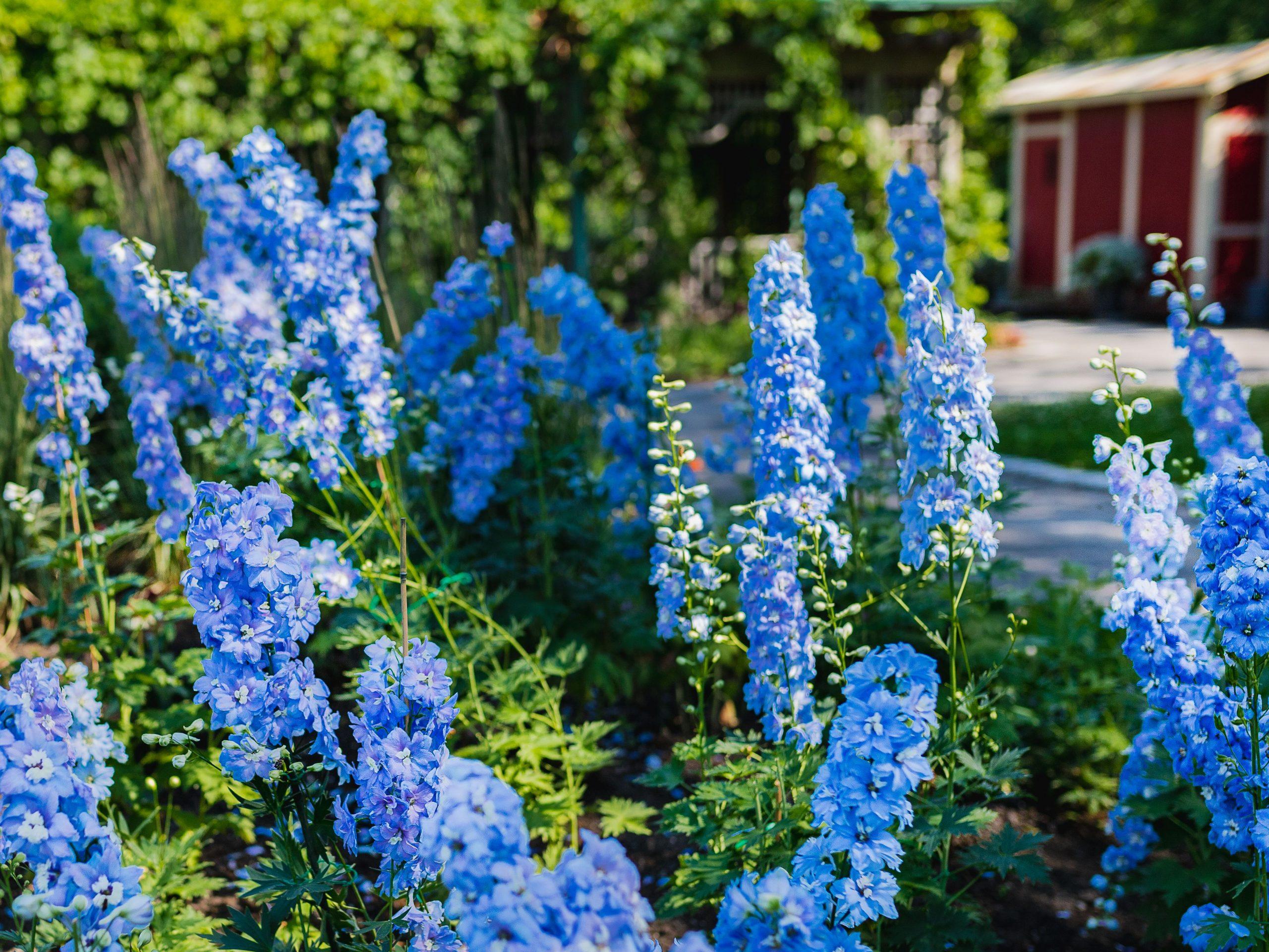 Best Plants That Make Your Garden Amazing!